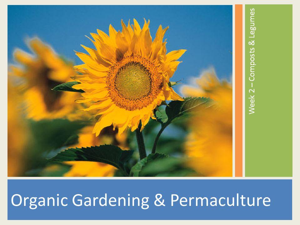 Organic Gardening & Permaculture Week 2 – Composts & Legumes