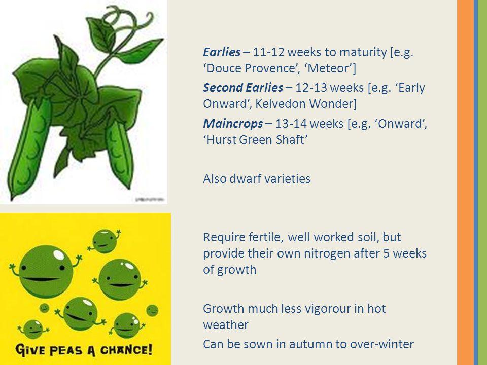 Earlies – 11-12 weeks to maturity [e.g. 'Douce Provence', 'Meteor'] Second Earlies – 12-13 weeks [e.g. 'Early Onward', Kelvedon Wonder] Maincrops – 13
