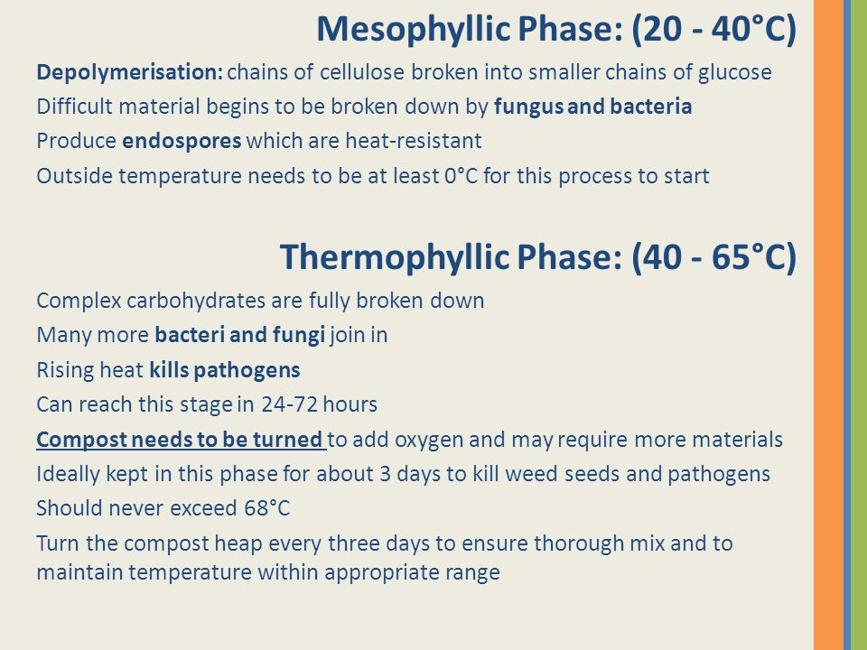 Mesophyllic Phase: (20 - 40°C) Depolymerisation: chains of cellulose broken into smaller chains of glucose Difficult material begins to be broken down by fungus and bacteria Produce endospores which are heat-resistant Outside temperature needs to be at least 0°C for this process to start Thermophyllic Phase: (40 - 65°C) Complex carbohydrates are fully broken down Many more bacteri and fungi join in Rising heat kills pathogens Can reach this stage in 24-72 hours Compost needs to be turned to add oxygen and may require more materials Ideally kept in this phase for about 3 days to kill weed seeds and pathogens Should never exceed 68°C Turn the compost heap every three days to ensure thorough mix and to maintain temperature within appropriate range
