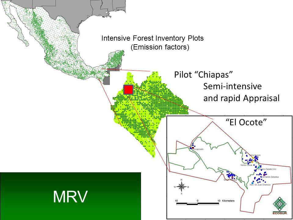 Pilot Chiapas Semi-intensive and rapid Appraisal El Ocote MRV Intensive Forest Inventory Plots (Emission factors)