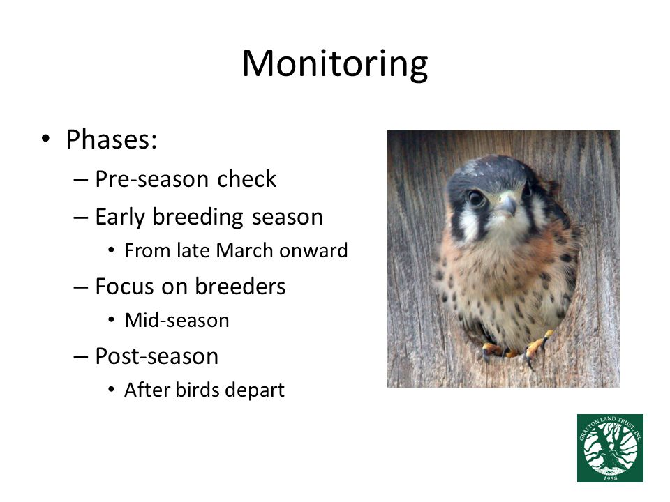 Monitoring Phases: – Pre-season check – Early breeding season From late March onward – Focus on breeders Mid-season – Post-season After birds depart