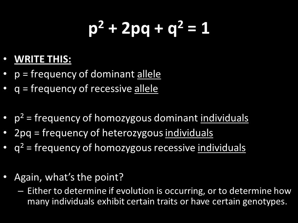 WRITE THIS: p = frequency of dominant allele q = frequency of recessive allele p 2 = frequency of homozygous dominant individuals 2pq = frequency of h