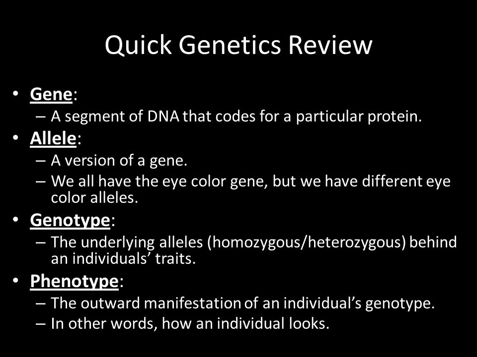 Quick Genetics Review Gene: – A segment of DNA that codes for a particular protein. Allele: – A version of a gene. – We all have the eye color gene, b