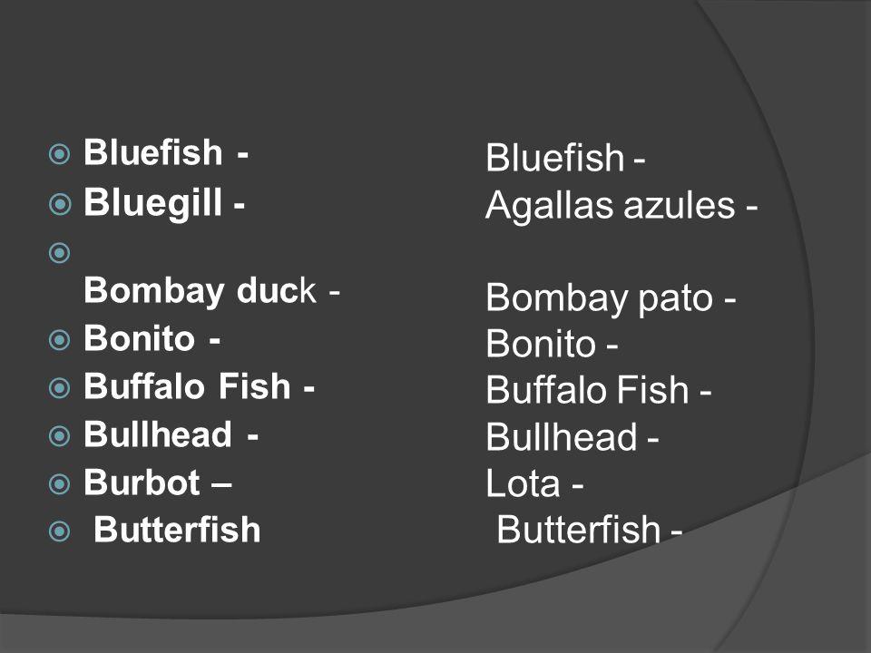 |  Bluefish -  Bluegill -  Bombay duck -  Bonito -  Buffalo Fish -  Bullhead -  Burbot –  Butterfish Bluefish - Agallas azules - Bombay pato - Bonito - Buffalo Fish - Bullhead - Lota - Butterfish -