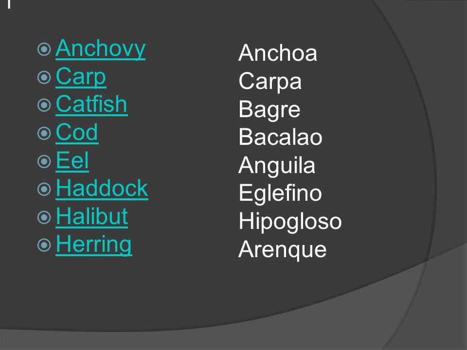 |  Anchovy Anchovy  Carp Carp  Catfish Catfish  Cod Cod  Eel Eel  Haddock Haddock  Halibut Halibut  Herring Herring Anchoa Carpa Bagre Bacalao Anguila Eglefino Hipogloso Arenque