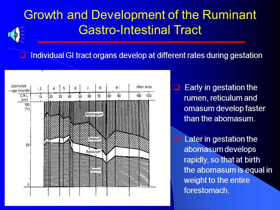 Growth and Development of the Ruminant Gastro-Intestinal Tract   Rumen papillae begin growth and development early in gestation.   The process beg