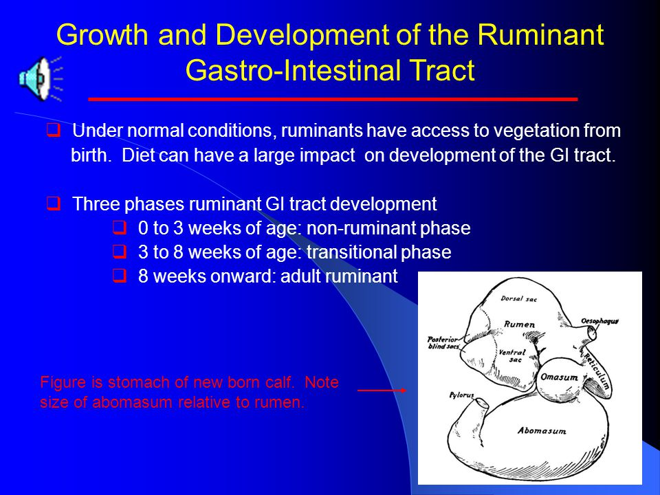 Growth and Development of the Ruminant Gastro-Intestinal Tract   Under normal conditions, ruminants have access to vegetation from birth.