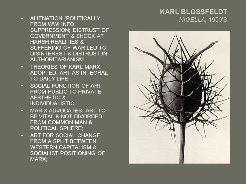 KARL BLOSSFELDT NIGELLA, 1950'S ALIENATION (POLITICALLY FROM WWI INFO SUPPRESSION; DISTRUST OF GOVERNMENT & SHOCK AT HARSH REALITIES & SUFFERING OF WAR LED TO DISINTEREST & DISTRUST IN AUTHORITARIANISM THEORIES OF KARL MARX ADOPTED: ART AS INTEGRAL TO DAILY LIFE SOCIAL FUNCTION OF ART FROM PUBLIC TO PRIVATE AESTHETIC & INDIVIDUALISTIC; MAR X ADVOCATES: ART TO BE VITAL & NOT DIVORCED FROM COMMON MAN & POLITICAL SPHERE; ART FOR SOCIAL CHANGE FROM A SPLIT BETWEEN WESTERN CAPITALISM & SOCIALIST POSITIONING OF MARX;