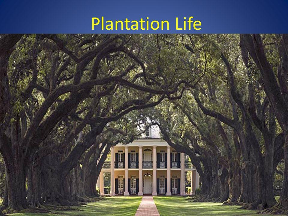 Plantation Life