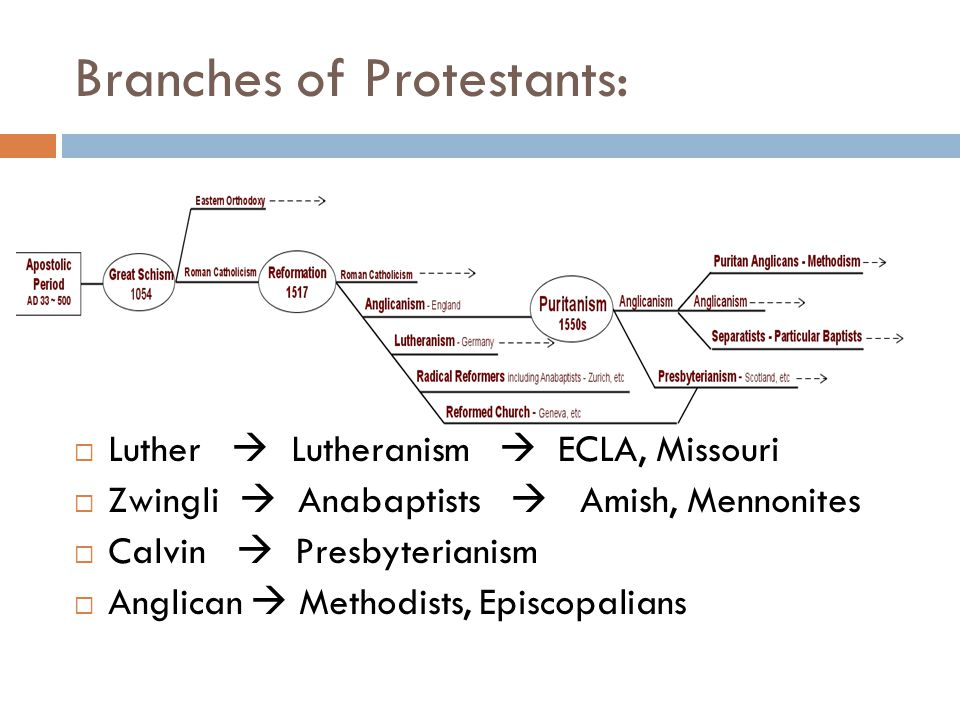 Branches of Protestants:  Luther  Lutheranism  ECLA, Missouri  Zwingli  Anabaptists  Amish, Mennonites  Calvin  Presbyterianism  Anglican  Methodists, Episcopalians