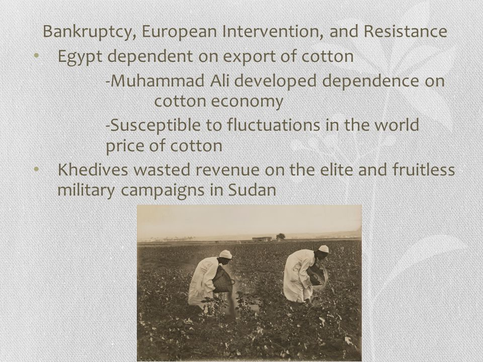 Bankruptcy, European Intervention, and Resistance Egypt dependent on export of cotton -Muhammad Ali developed dependence on cotton economy -Susceptible to fluctuations in the world price of cotton Khedives wasted revenue on the elite and fruitless military campaigns in Sudan