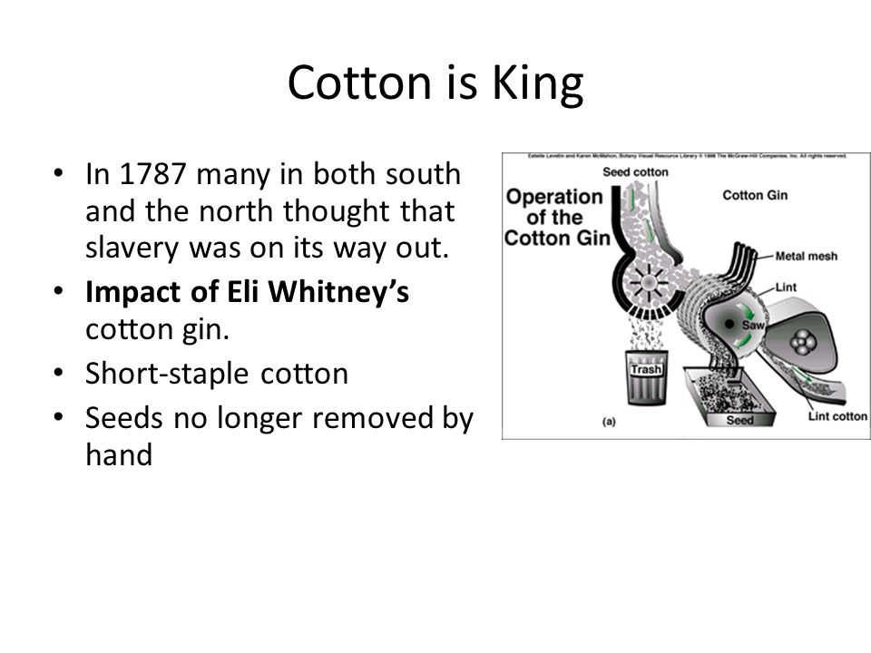 Cotton is King In 1787 many in both south and the north thought that slavery was on its way out. Impact of Eli Whitney's cotton gin. Short-staple cott