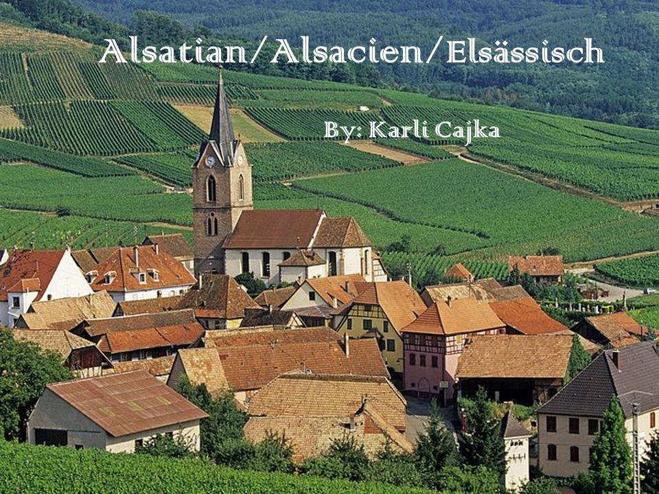 Alsatian/Alsacien/ Elsässisch By: Karli Cajka