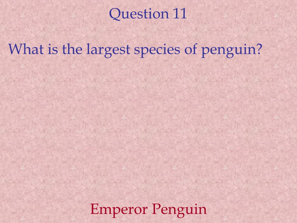 Question 11 What is the largest species of penguin Emperor Penguin