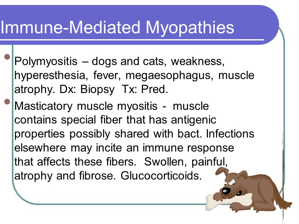 Immune-Mediated Myopathies Polymyositis – dogs and cats, weakness, hyperesthesia, fever, megaesophagus, muscle atrophy.