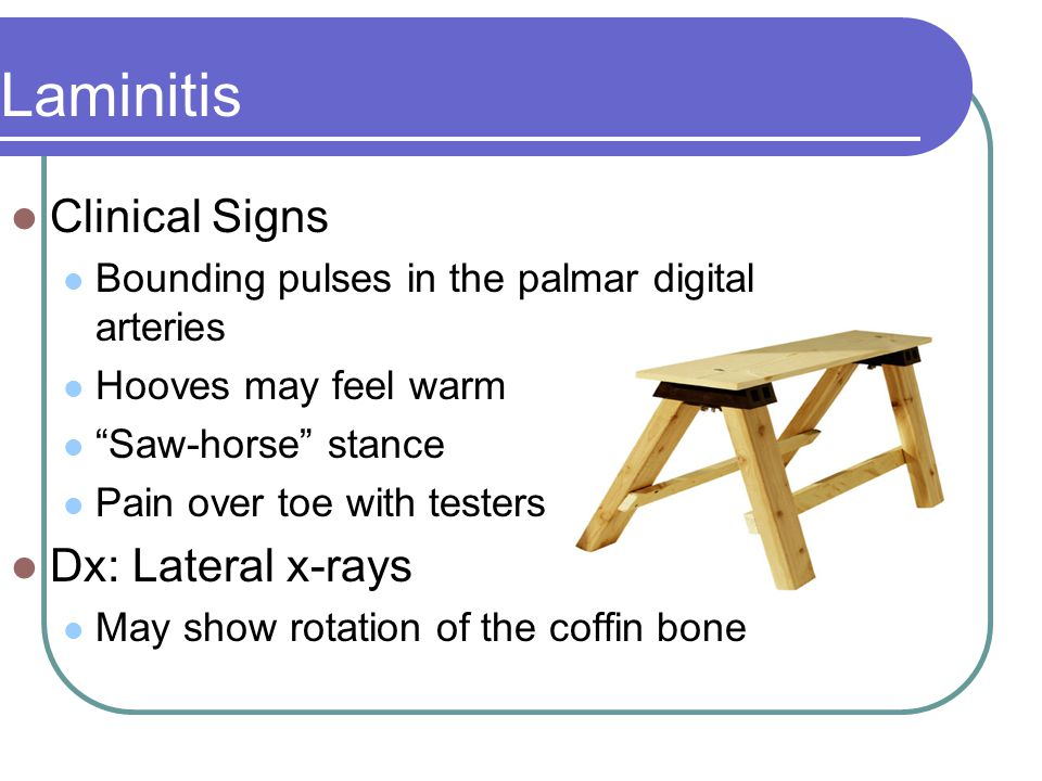 Clinical Signs Bounding pulses in the palmar digital arteries Hooves may feel warm Saw-horse stance Pain over toe with testers Dx: Lateral x-rays May show rotation of the coffin bone