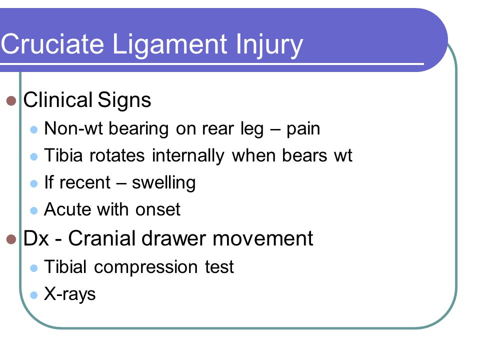 Cruciate Ligament Injury Clinical Signs Non-wt bearing on rear leg – pain Tibia rotates internally when bears wt If recent – swelling Acute with onset Dx - Cranial drawer movement Tibial compression test X-rays