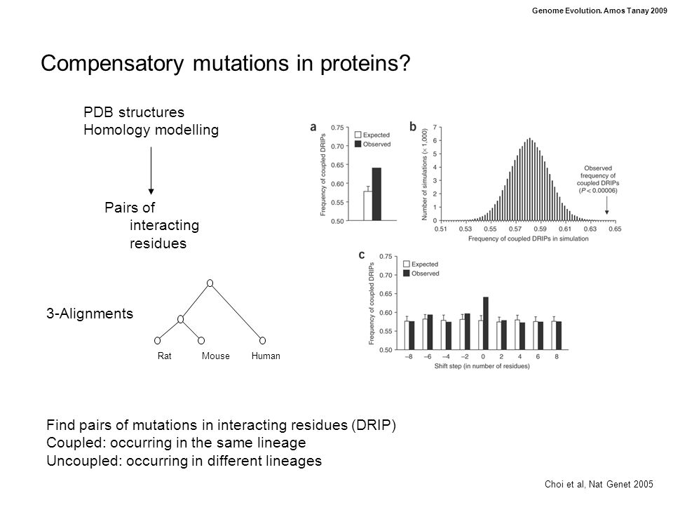 Genome Evolution. Amos Tanay 2009 Compensatory mutations in proteins.
