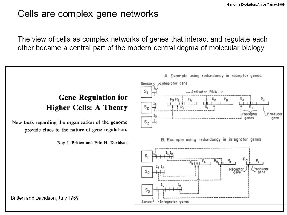 Genome Evolution. Amos Tanay 2009 Britten and Davidson, July 1969 The view of cells as complex networks of genes that interact and regulate each other