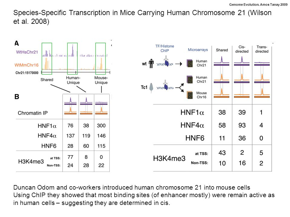 Genome Evolution. Amos Tanay 2009 Species-Specific Transcription in Mice Carrying Human Chromosome 21 (Wilson et al. 2008) Duncan Odom and co-workers