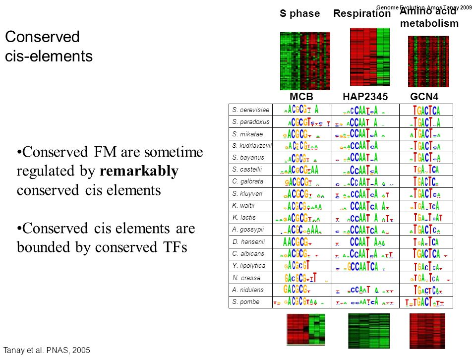 Genome Evolution. Amos Tanay 2009 Conserved cis-elements S.