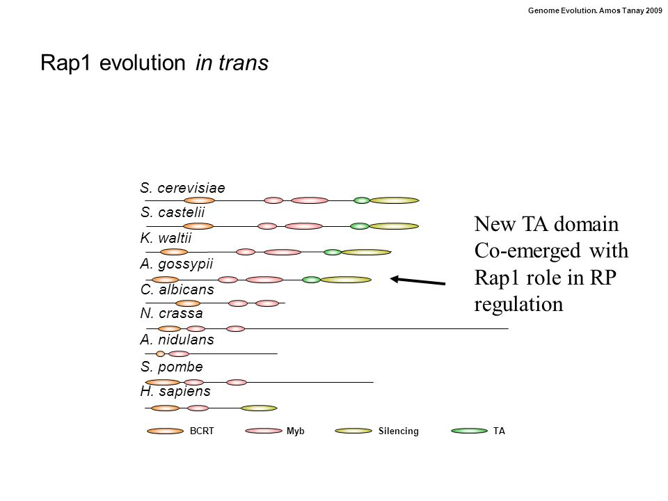 Genome Evolution. Amos Tanay 2009 Rap1 evolution in trans BCRTMybSilencingTA S.