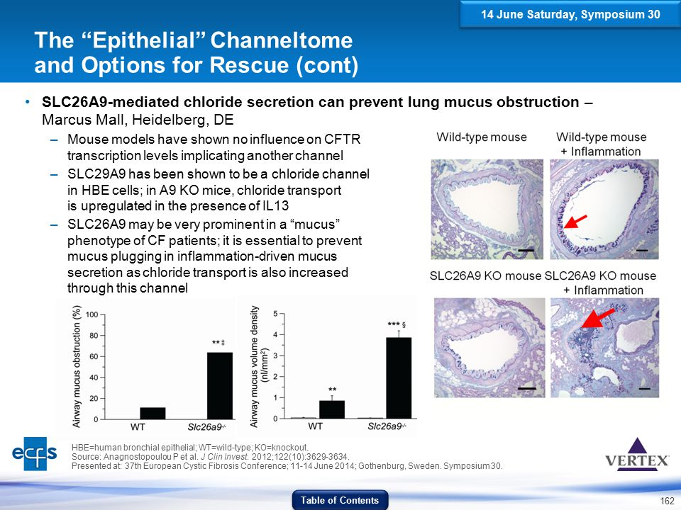 162 SLC26A9-mediated chloride secretion can prevent lung mucus obstruction – Marcus Mall, Heidelberg, DE –Mouse models have shown no influence on CFTR