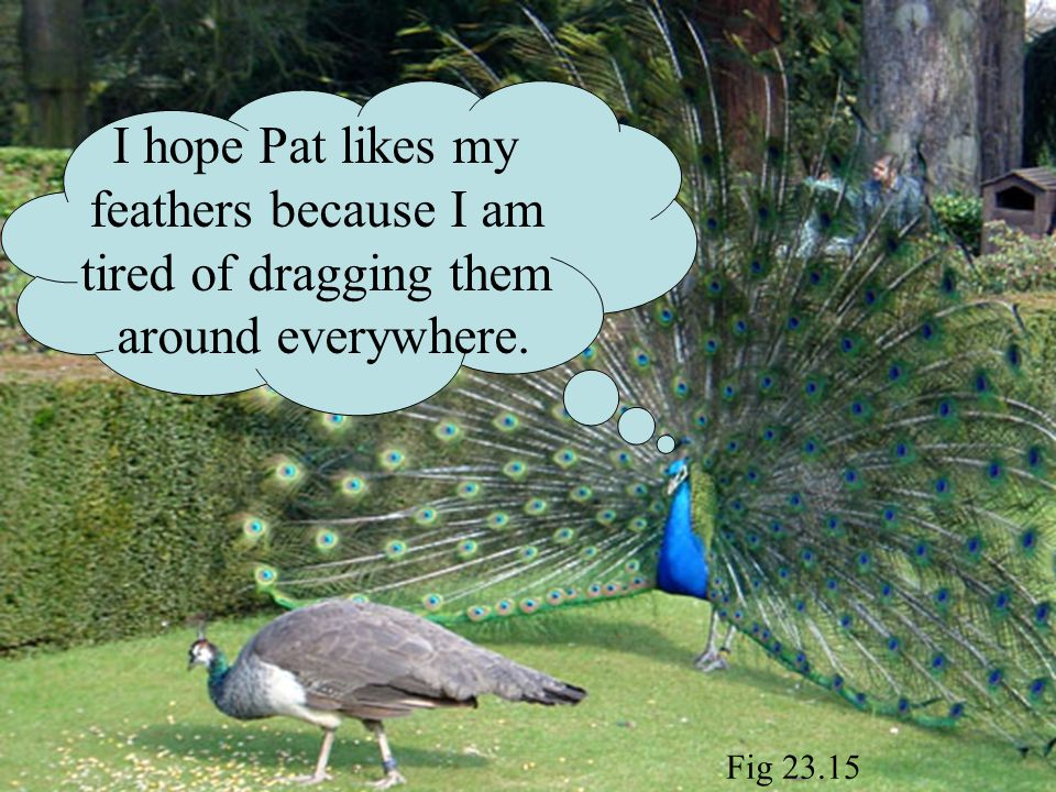 I hope Pat likes my feathers because I am tired of dragging them around everywhere. Fig 23.15
