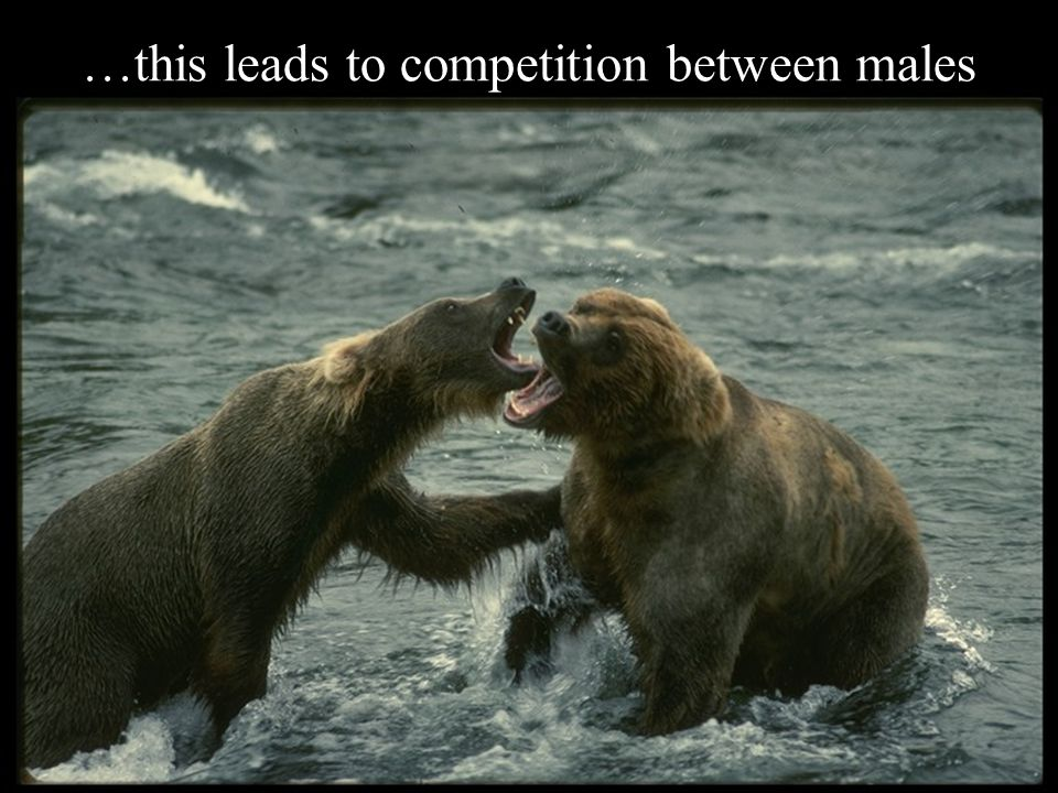 …this leads to competition between males