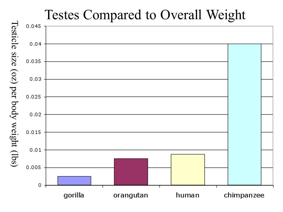 Testes Compared to Overall Weight Testicle size (oz) per body weight (lbs)