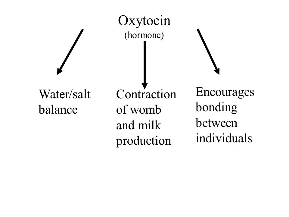 Oxytocin (hormone) Water/salt balance Contraction of womb and milk production Encourages bonding between individuals