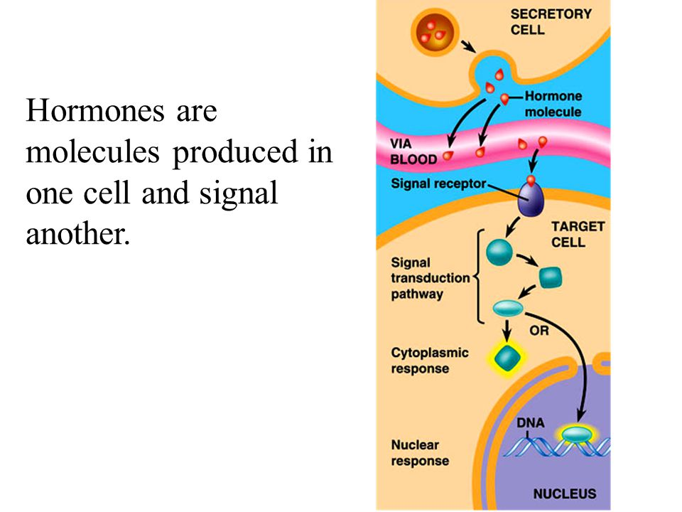 Hormones are molecules produced in one cell and signal another.