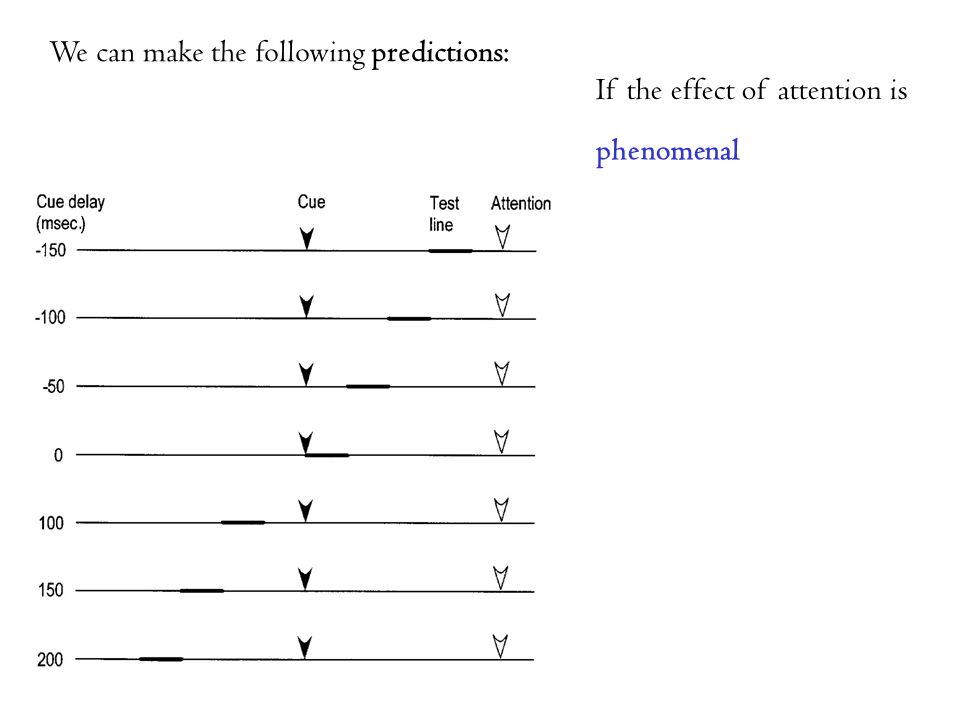 We can make the following predictions: phenomenal If the effect of attention is