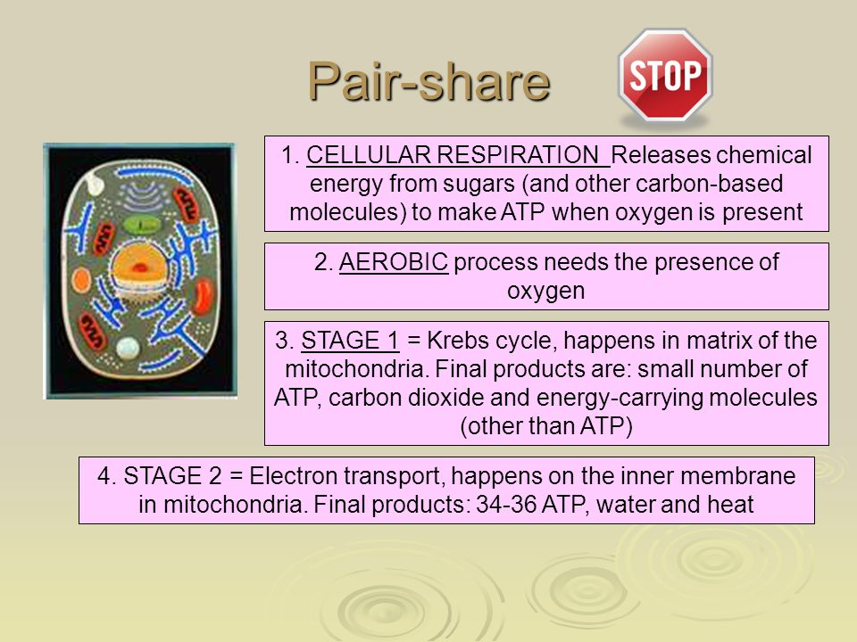 Pair-share 2. AEROBIC process needs the presence of oxygen 3. STAGE 1 = Krebs cycle, happens in matrix of the mitochondria. Final products are: small