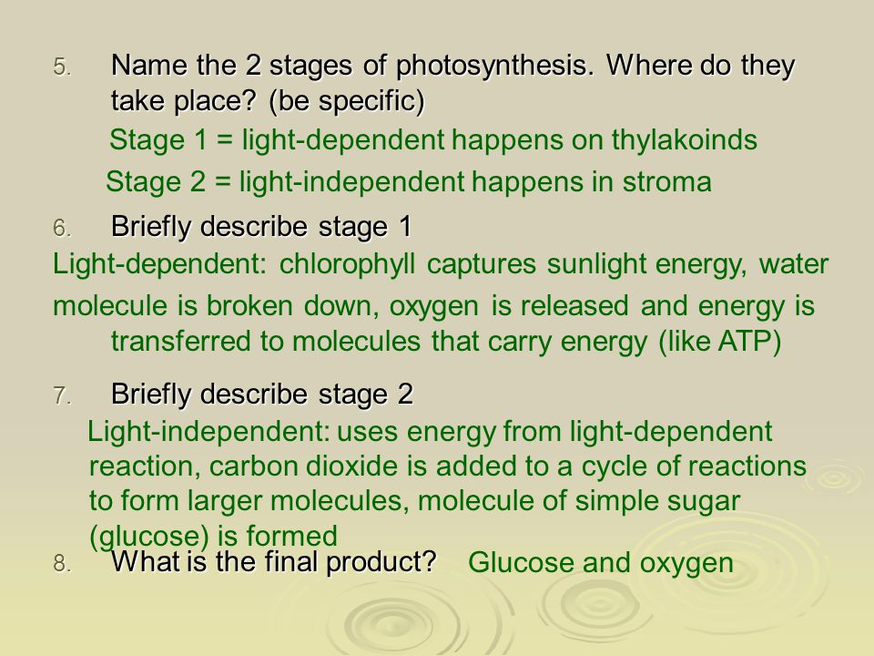 Sunlight energy Photosynthesis Energy rich molecule (glucose) Plants, animals and humans use glucose as source of energy Remember this slide from last class.
