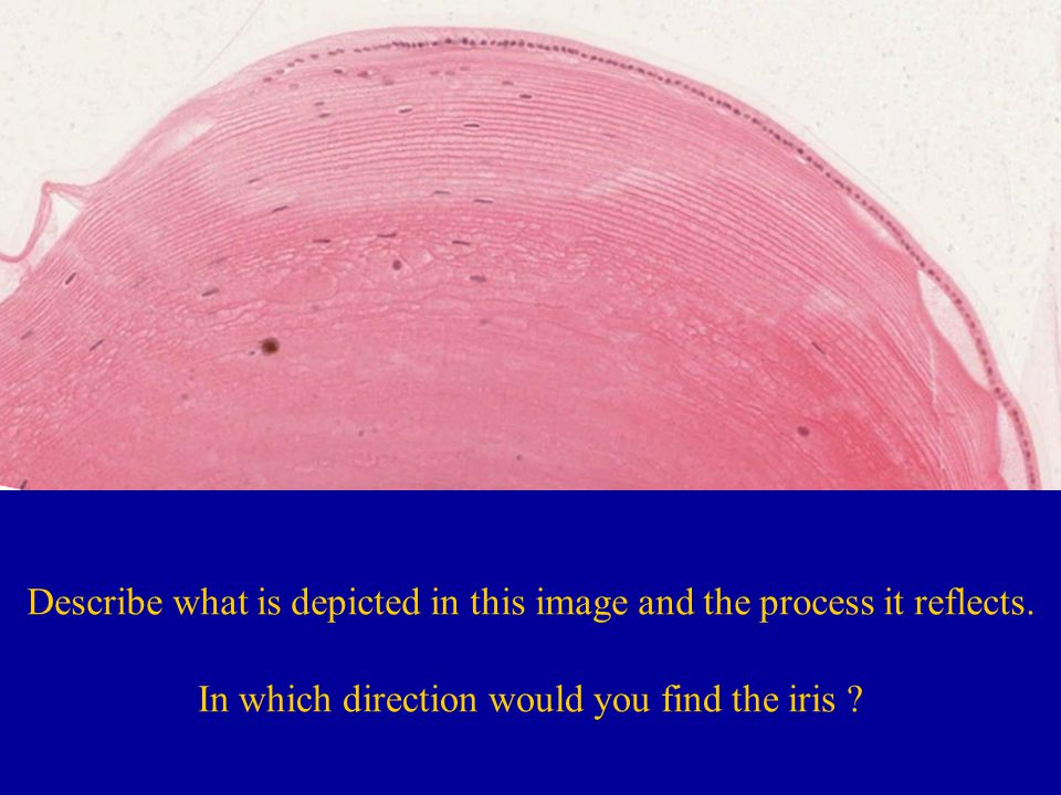 Describe what is depicted in this image and the process it reflects.