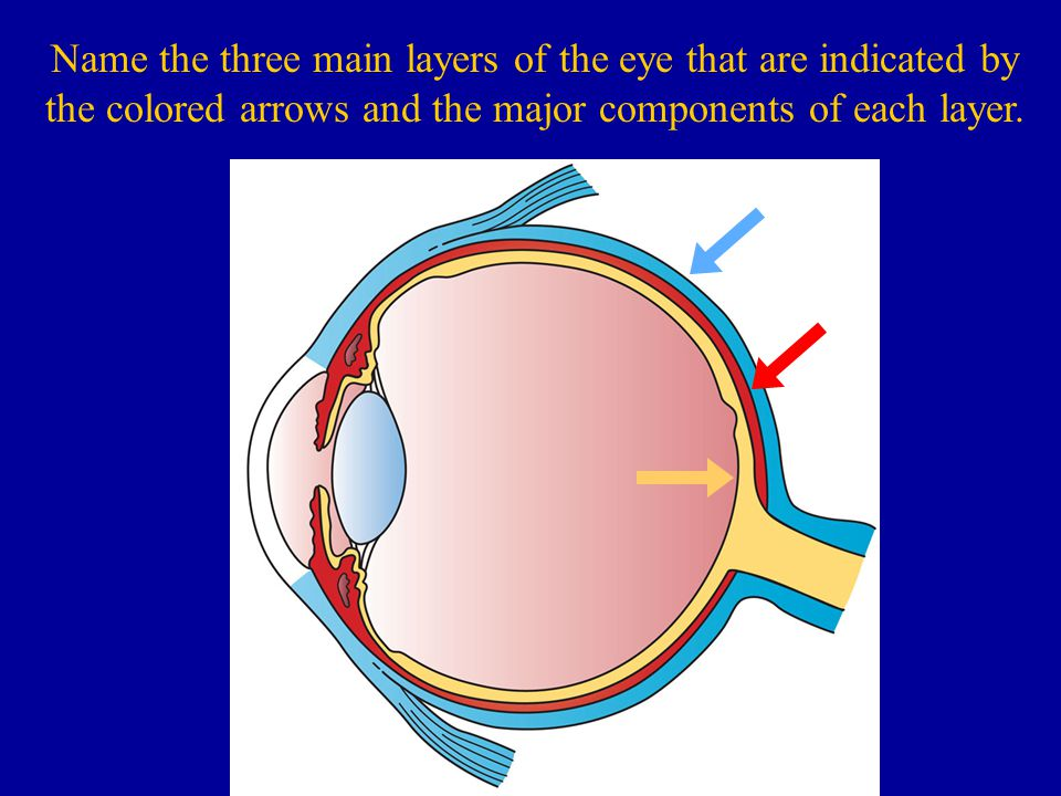Name the three main layers of the eye that are indicated by the colored arrows and the major components of each layer.