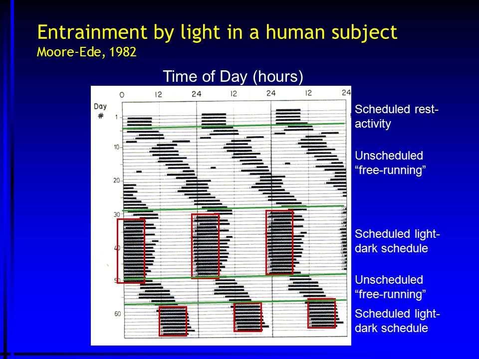 "Entrainment by light in a human subject Moore-Ede, 1982 Time of Day (hours) Scheduled rest- activity Unscheduled ""free-running"" Scheduled light- dark"