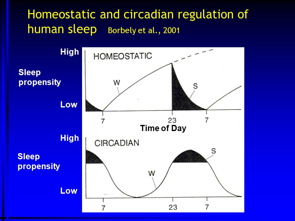 Homeostatic and circadian regulation of human sleep Borbely et al., 2001 Time of Day Sleep propensity High Low