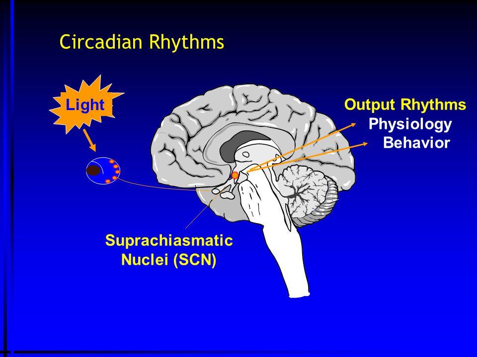 Circadian Rhythms Suprachiasmatic Nuclei (SCN) Light Output Rhythms Physiology Behavior