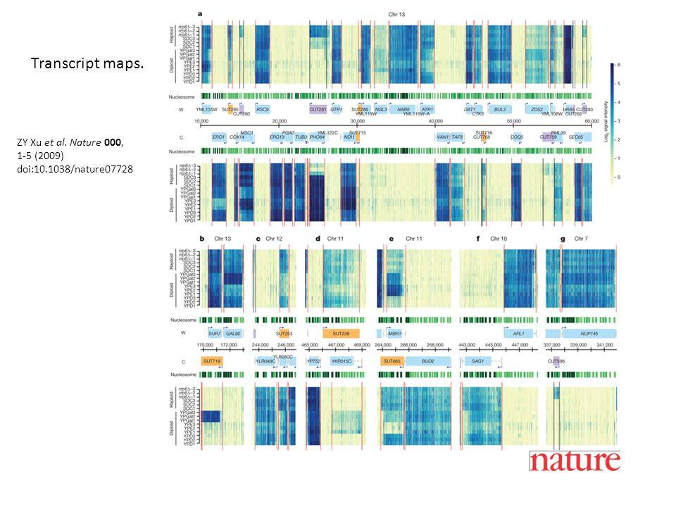 ZY Xu et al. Nature 000, 1-5 (2009) doi:10.1038/nature07728 Transcript maps.