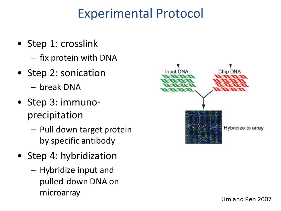 Experimental Protocol Step 1: crosslink –fix protein with DNA Step 2: sonication –break DNA Step 3: immuno- precipitation –Pull down target protein by