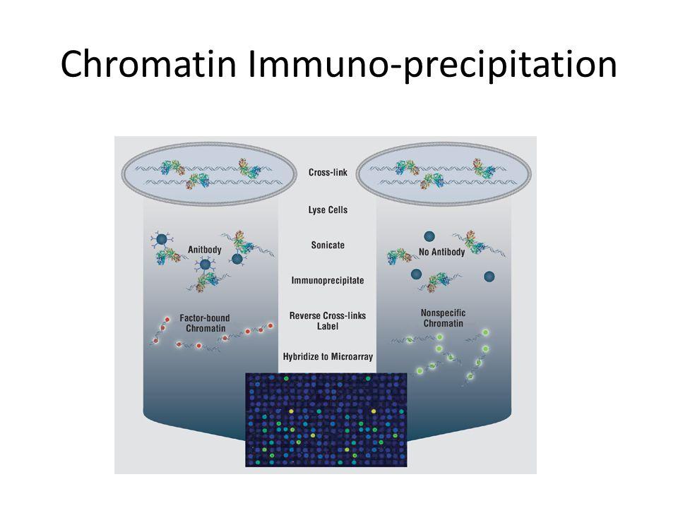 Chromatin Immuno-precipitation