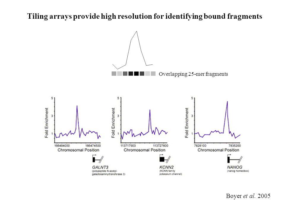 Boyer et al. 2005 Tiling arrays provide high resolution for identifying bound fragments Overlapping 25-mer fragments
