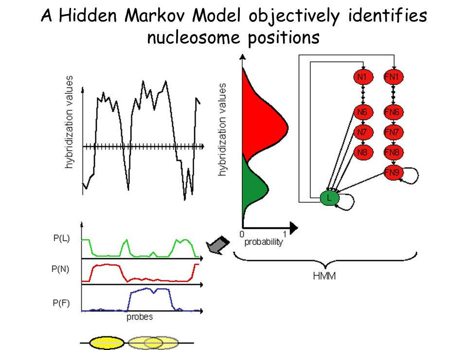 A Hidden Markov Model objectively identifies nucleosome positions