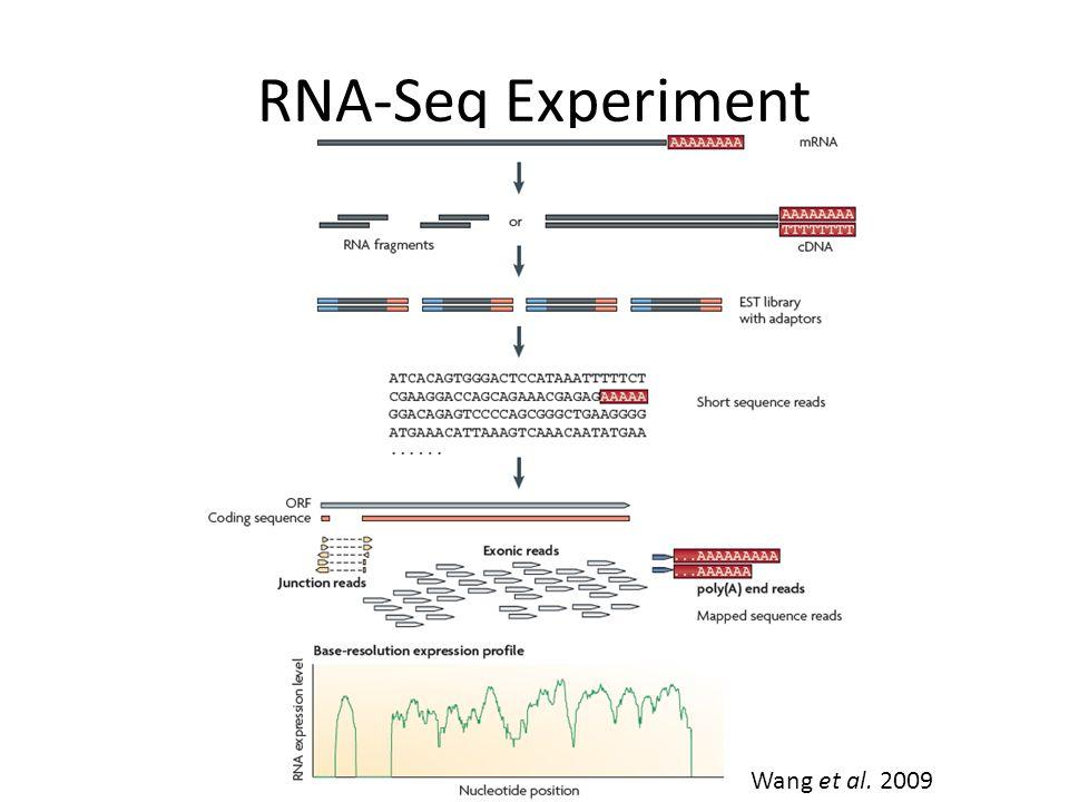 RNA-Seq Experiment Wang et al. 2009