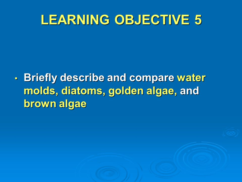 LEARNING OBJECTIVE 5 Briefly describe and compare water molds, diatoms, golden algae, and brown algae Briefly describe and compare water molds, diatom