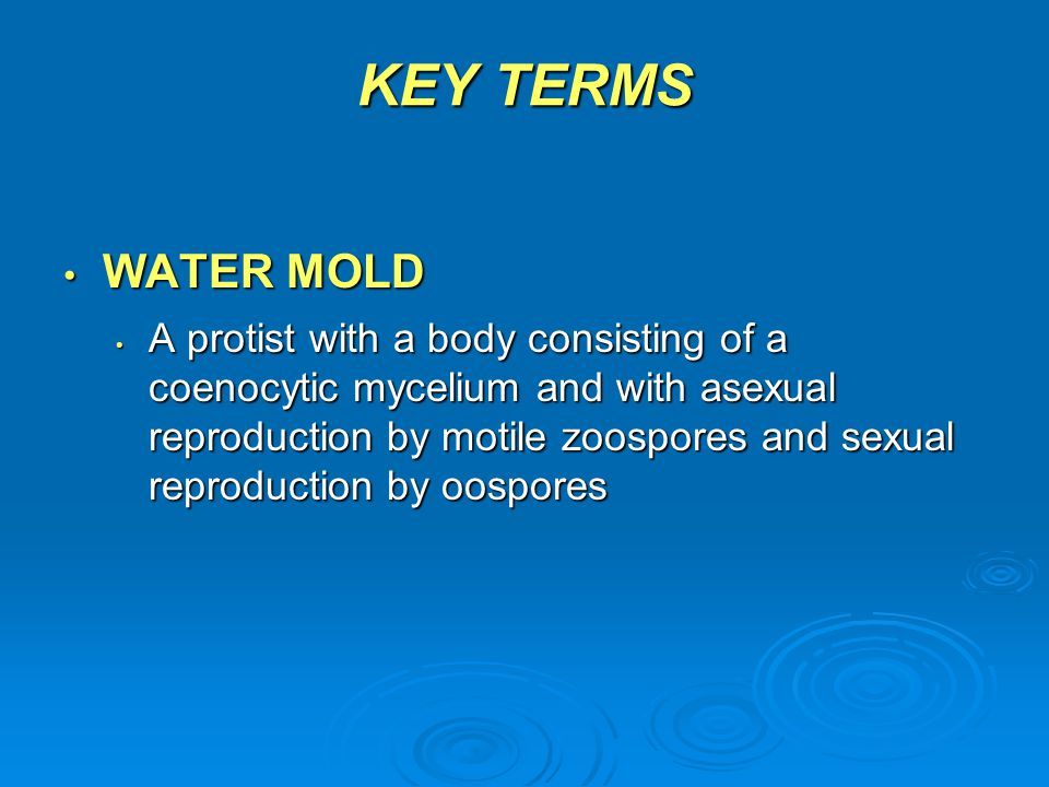 KEY TERMS WATER MOLD WATER MOLD A protist with a body consisting of a coenocytic mycelium and with asexual reproduction by motile zoospores and sexual
