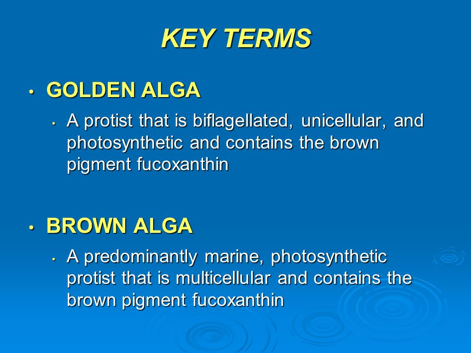 KEY TERMS GOLDEN ALGA GOLDEN ALGA A protist that is biflagellated, unicellular, and photosynthetic and contains the brown pigment fucoxanthin A protis