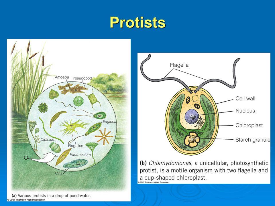Relationships Among Eukaryotes